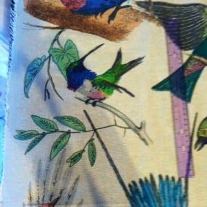 photo bird hummingbird 2